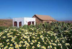 Günstiges Ferienhaus auf Fuerteventura - Betancuria  (Nr. 0967)