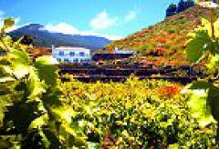 Ferienwohnung mit Pool bei Las Manchas im Westen von La Palma (Nr. 0816.3)