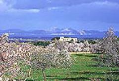 Traumhafte Finca auf Mallorca mit Blick auf die Bucht von Alcudia (Nr. 0381)