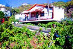 Ferienhaus im Weinberg bei Los Gigantes (Nr. 0707)