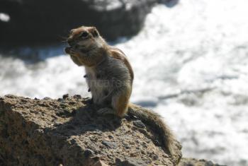Atlashörnchen - La Pared