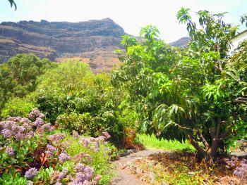 Garten mit mediterranen Obstbäumen