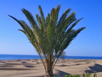 Strandurlaub Playa del Ingles