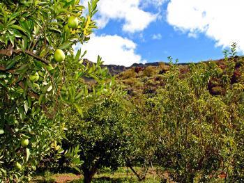 Obst, Mandeln und Oliven