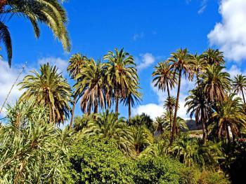 Das Tal der Palmen