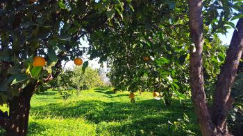 Naturbelassener Garten mit Obstbäumen
