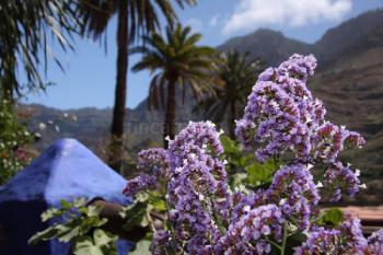 Grüne Norden von Gran Canaria
