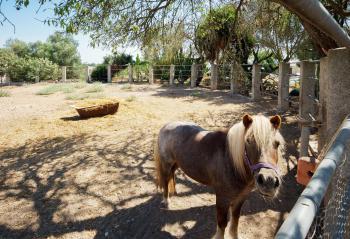 Pony auf dem Nachbargrundstück