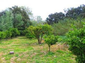 Oliven- und Orangenbäume