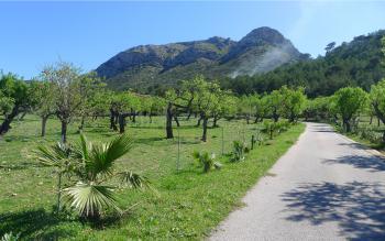 Auffahrt - Ferienhaus bei Colonia de Sant Pere