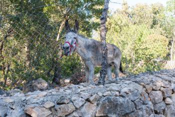 Tierische Nachbarn - der Esel Miquelet