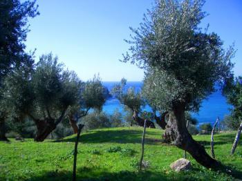 Blick über Olivenhaine zum Meer