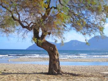Ferienhaus am Strand von Son Serra de Marina