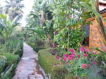 Garten mit kanarischer Bepflanzung